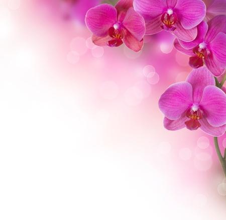 Photo pour Orchid Flower border design - image libre de droit