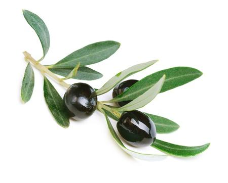 Olives over white