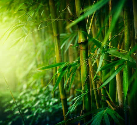 Bamboo murals bamboo forest wallpaper for Bamboo mural wallpaper