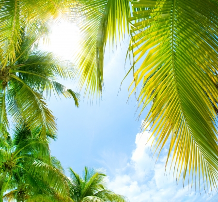 Photo for Tropical Background  - Royalty Free Image
