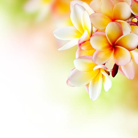 Photo for Frangipani Tropical Spa Flower  Plumeria  Border Design  - Royalty Free Image
