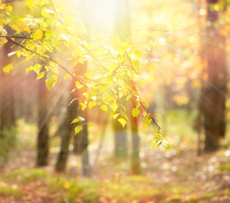 Foto de Autumn  Fall - Imagen libre de derechos