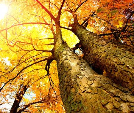 Autumn Trees  Fall
