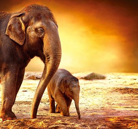 Photo pour Elephant Mother and Baby outdoors  - image libre de droit