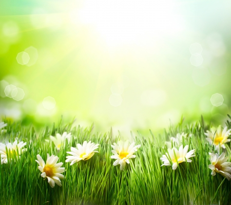 Photo for Spring Meadow with Daisies  Grass and Flowers border  - Royalty Free Image