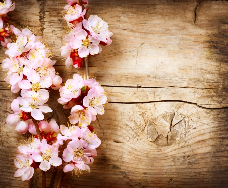 Photo for Spring Blossom over wood background  - Royalty Free Image