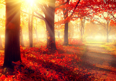 Beautiful scene misty old autumn forest