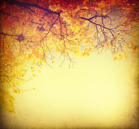 Abstract autumnal background with colorful leavesの写真素材