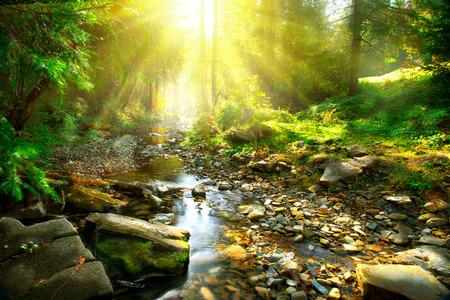 Foto de Mountain river. Tranquil scenery in the middle of green forest - Imagen libre de derechos
