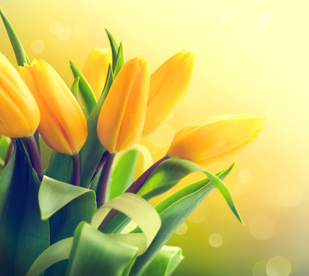 Yellow tulips bouquet over nature green blurred background