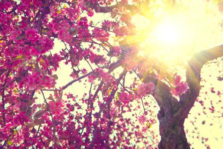 Foto de Spring blossom. Beautiful nature scene with blooming tree - Imagen libre de derechos