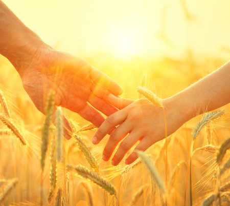 Photo for Couple taking hands and walking on golden wheat field over beautiful sunset - Royalty Free Image