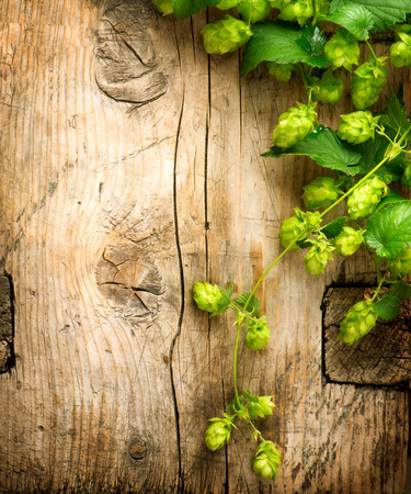 Hop twig over wooden cracked table background border. Vintage toned. Beer production ingredient. Brewery. Beautiful fresh-picked whole hops border design close-up. Brewing concept surface. Vertical image.