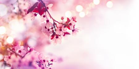 Foto de Spring blossom border with pink blooming tree - Imagen libre de derechos
