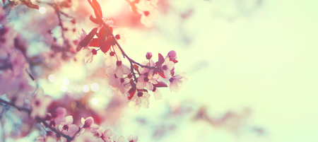 Foto de Beautiful spring nature scene with pink blooming tree - Imagen libre de derechos