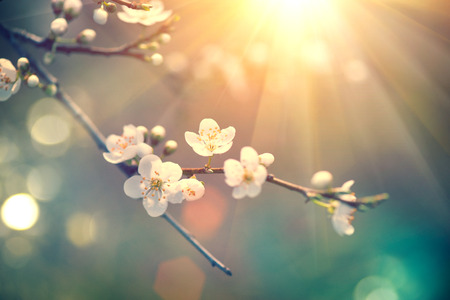 Photo pour Beautiful spring nature scene with blooming tree - image libre de droit
