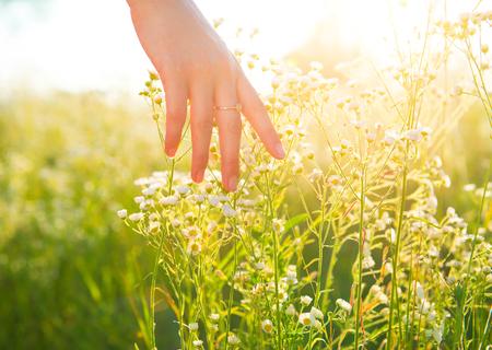 Foto de Woman hand running through meadow field with wilde flowers - Imagen libre de derechos