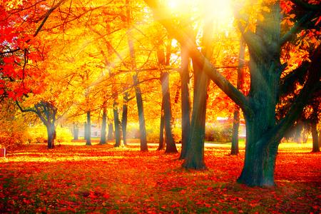 Foto de Autumn. Fall nature scene. Beautiful autumnal park - Imagen libre de derechos