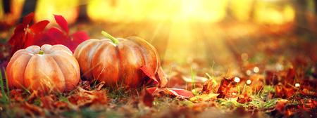 Foto de Autumn Halloween pumpkins. Orange pumpkins over bright autumnal nature background - Imagen libre de derechos