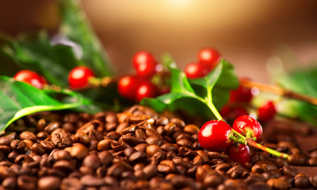 Photo for Coffee. Real coffee plant on roasted coffee background - Royalty Free Image