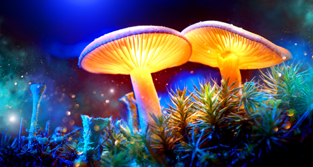 Photo for Mushroom. Fantasy glowing mushrooms in mystery dark forest closeup - Royalty Free Image