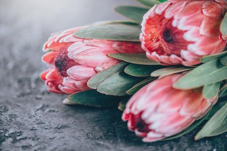 Foto de Protea buds closeup. Bunch of pink King Protea flowers over dark background. Valentine's Day bouquet - Imagen libre de derechos