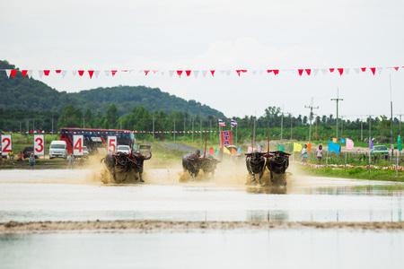 CHONBURI THAILAND - August 30 : Status of traditional buffalo race, which is held annually at Chonburi, Thailand. on August 30, 2015. Traditionally held by farmers to conserve water buffalos in Thailand