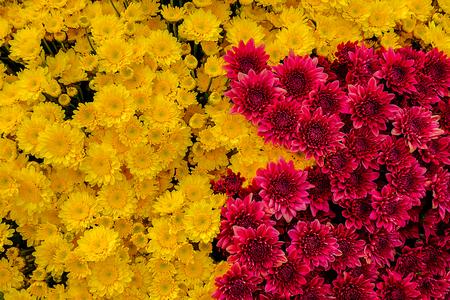 Beautiful flowers background for wedding scene Decoration