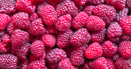 Beautiful summer and autumn berries. Raspberry berry, harvesting. Vegetarian food and lots of vitamins. Stock Photo