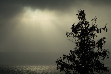 Cedar tree silhouette and sparkling water illuminated in the fog by sunshine in the thick foggy morning