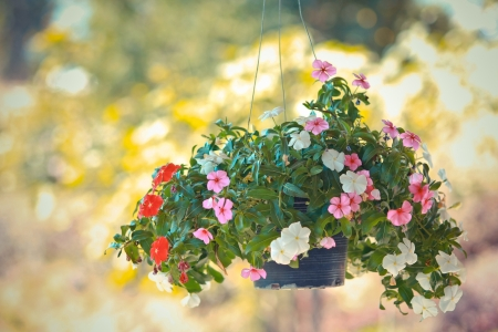 colorful flower hanging