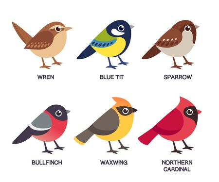 Illustration pour Set of cute cartoon small birds: Cedar Waxwing, Northern Cardinal, common Sparrow, Wren, Blue Tit and Bullfinch. Simple drawing style, isolated clip art vector illustration. - image libre de droit