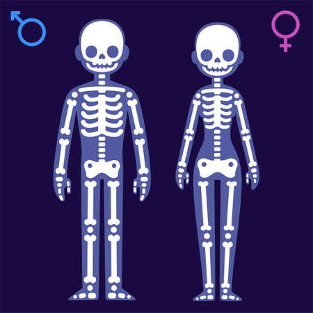 Illustration pour Stylized cartoon male and female skeletons with gender symbols. Man and woman x-ray vector illustration. - image libre de droit