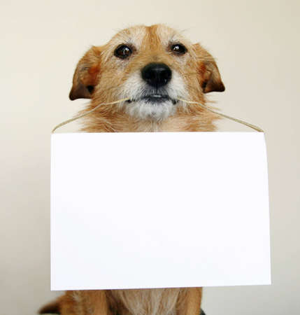 Dog holding a blank sign in her mouth