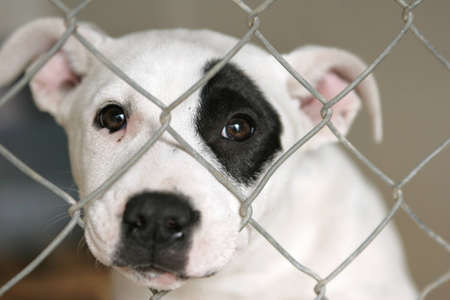 Photo for Sad pup looking out through the wires of his cage. - Royalty Free Image