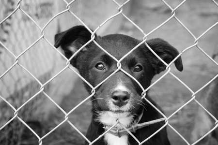 Photo for Sad pup in a pen - Royalty Free Image