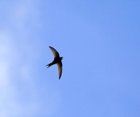 Common Swift and cloud