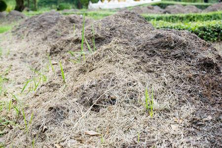 Pig manure fertilizer