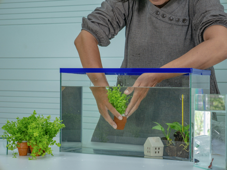 Photo for Asian women set the fish tank - Royalty Free Image