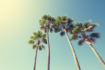 California palm trees in vintage style.