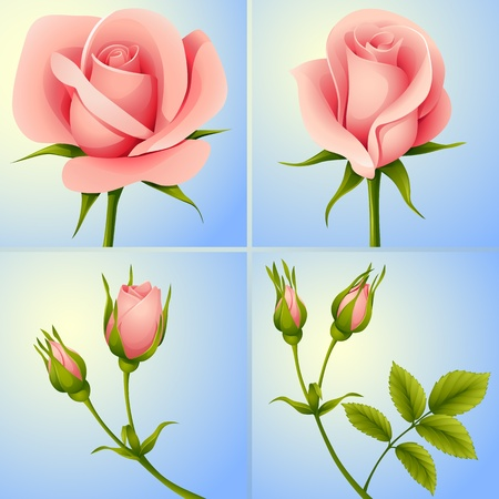 vector set of four pink roses on blue background