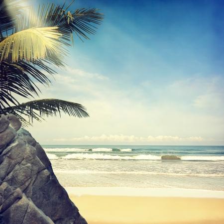 Photo pour vintage palm background - image libre de droit