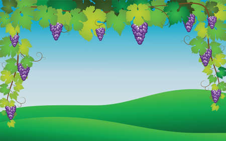 Illustration pour Hanging bunch of ripe purple grapes with branches and leaves on a background of green grass and sky. Realistic vector illustration. - image libre de droit