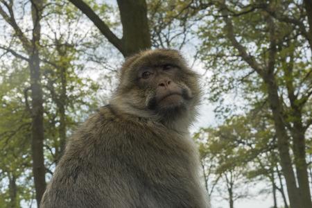 Sad looking monkey