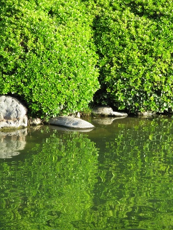 Decorative green foliage and reflection in the lake
