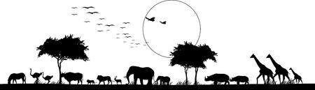 Illustration pour beauty silhouette of safari animal wildlife - image libre de droit