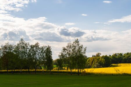 Foto de Beautiful field of yellow rape and green trees. Meadow with a forest Cultivation of agricultural crops. Spring sunny landscape with blue sky. Wallpaper of nature - Imagen libre de derechos