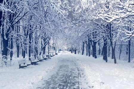 Photo pour Winter landscape with trees covered with white fluffy snow. Trampled snowy road for a walk in a public park. Benches for rest on the side of the road. - image libre de droit
