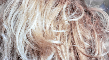 natural blonde vertical curls. Real woman hair texture. Human hair weft, Dry hair with silky volumes. Real european human hair wallpaper texture. Brown blond dark blonde and black.