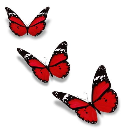 Three red butterflies isolated on white